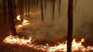 Лесные пожары в Московской области...